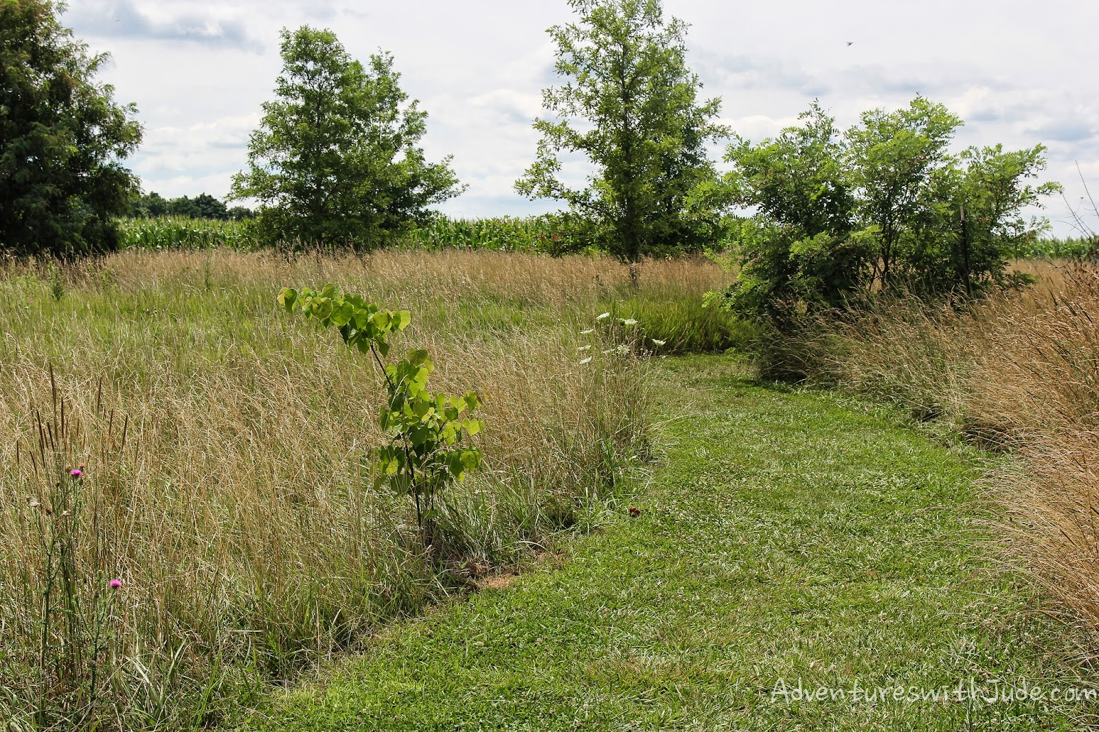"Antietam Battlefield: The path from ""Clara's field"" to the battle."
