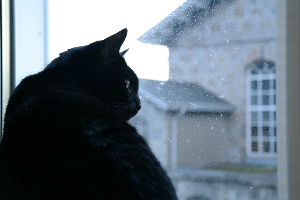 Gizmo, black cat, watching stormy weather out the window