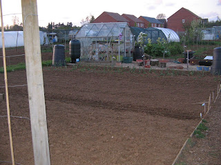 allotment with potatoes and broad beans and garlic and swede and turnip.