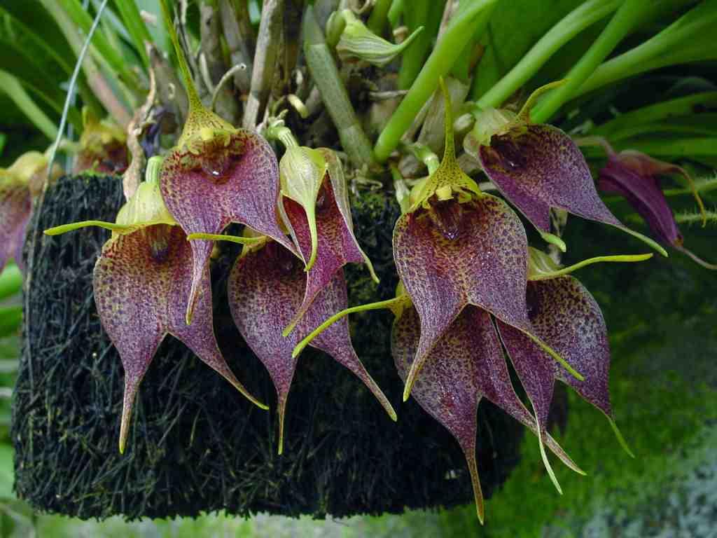 Arte y jardiner a plantas ex ticas for Jardineria y plantas
