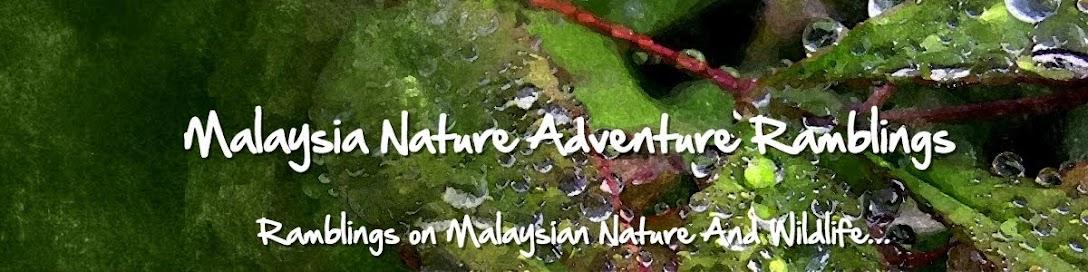 Malaysia Nature Adventure Ramblings
