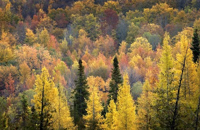 Michigan DNR seeks input on management of state forest land