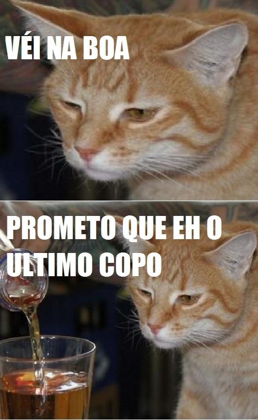 gato bebendo, vei na boa