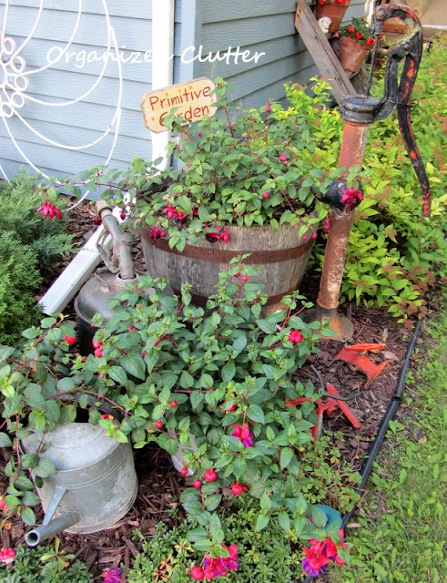 Junk mixed in with Fuchsias