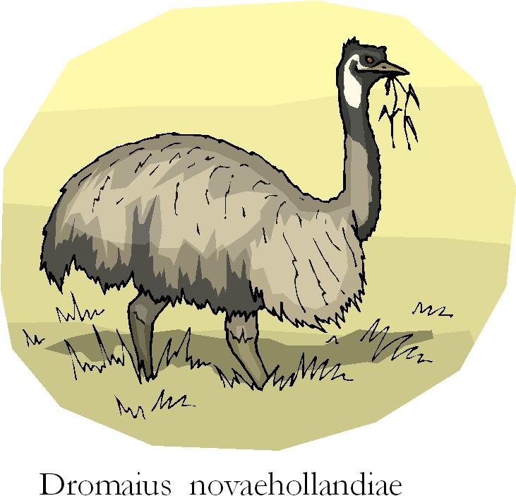 Emu | Dromaius Novaehollandiae Free Clipart