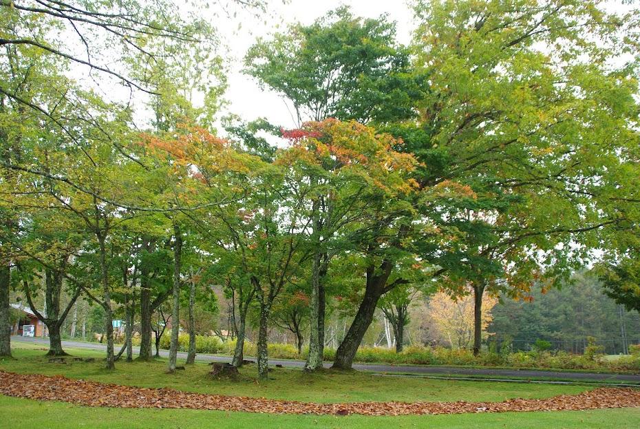 八ケ岳自然文化園の秋