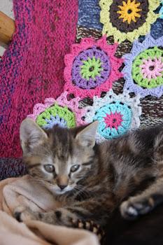 Hof-Kätzchen