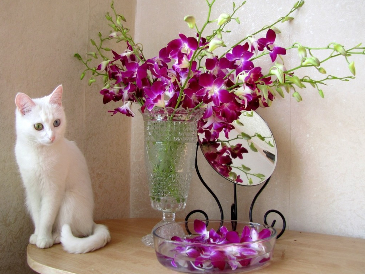 Cat flower vase wallpapers collection 7 wallpapers cat flower vase 7026820 reviewsmspy