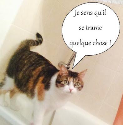 Chatte isabelle sur le rebord de la baignoire.