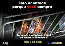 Cuide bem dos nossos animais: