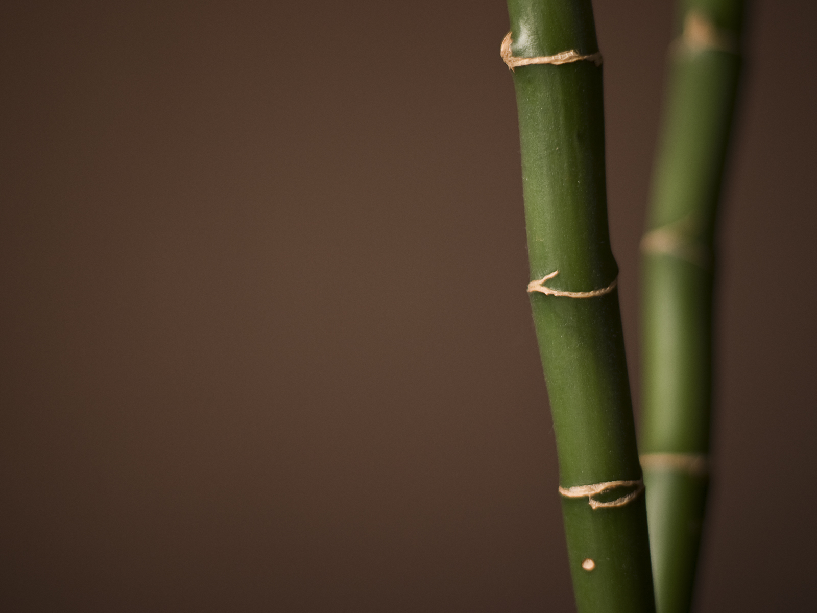 Bamboo wallpaper bamboo wallpapers 1 10 1600 x 1200 for Bamboo wallpaper for walls