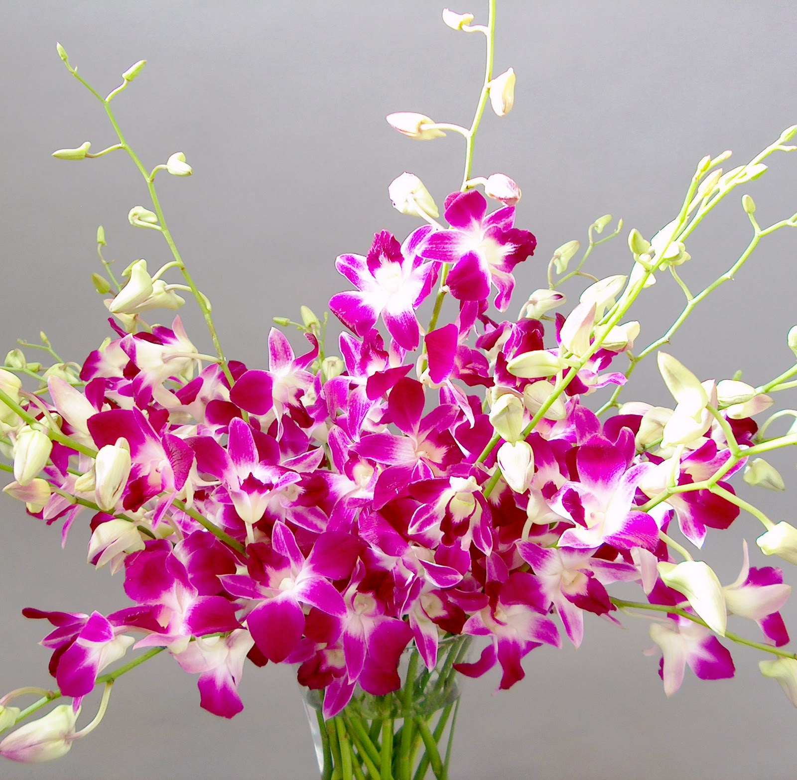 Orchid Flowers - A Close Up | Orchidaceous! Orchid Blog