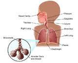 penyakit bronkopneumonia,Bronkopneumonia anak, Blog Keperawatan