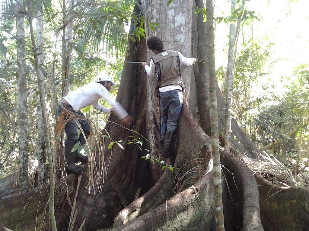 Inventário Florestal no estado do Rio identifica espécies de plantas ameaçadas de extinção