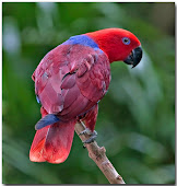 Bird of the Day