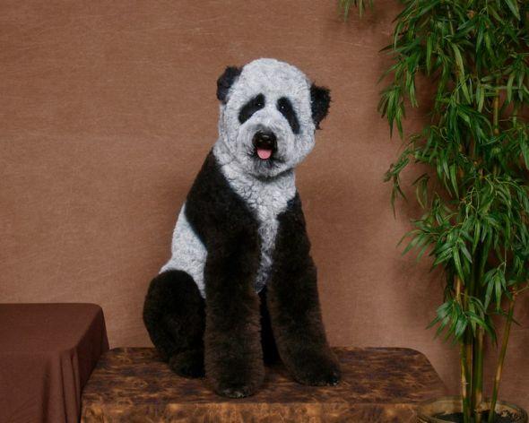 Ren Netherland fotografia animais estimação cães cachorros extreme pets fantasia Panda