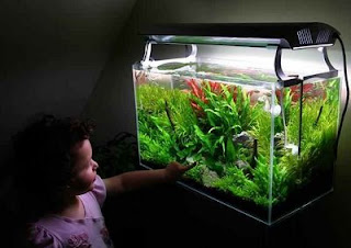 CO2 Injection System in Planted Aquariums