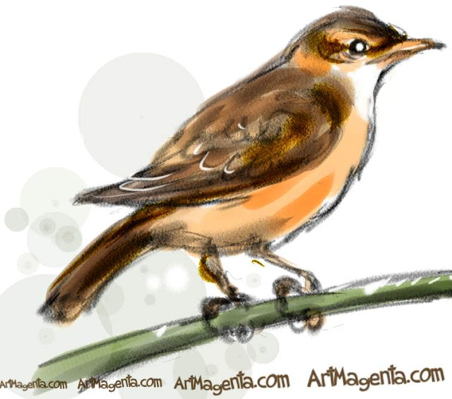 Great Reed Warbler  sketch painting. Bird art drawing by illustrator Artmagenta.