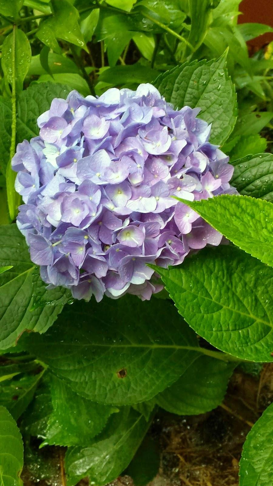 17th Herb And Flower Garden Tour The Everlasting Gardener