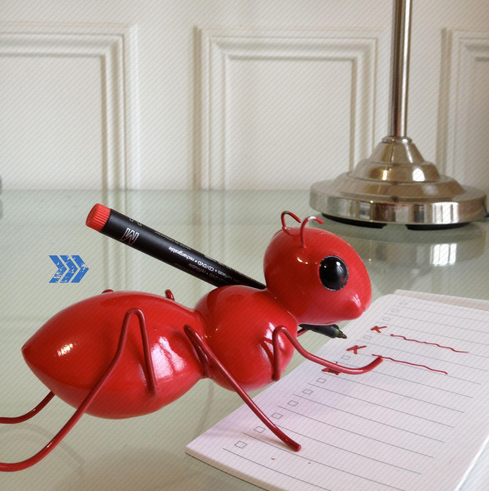 Sozuka sun novembre 2012 - Fourmi rouge et tamanoir ...