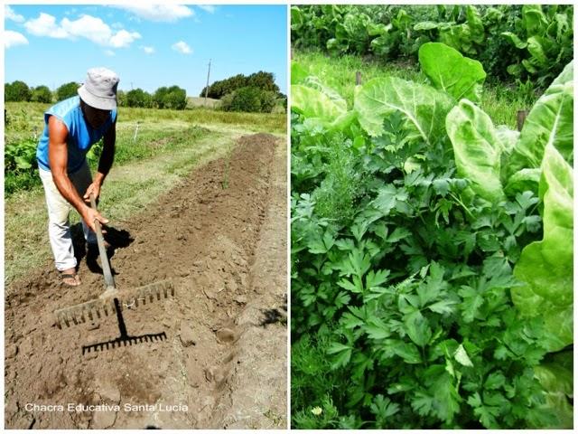Preparando la tierra para sembrar - Chacra Educativa Santa Lucía