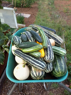 wheelbarrow full of squash