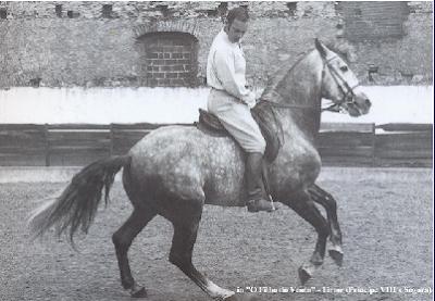 Cavalo Firme com Ferro D`Andrade