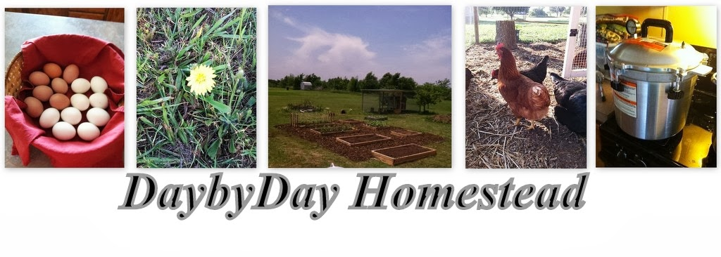 Day By Day Homestead