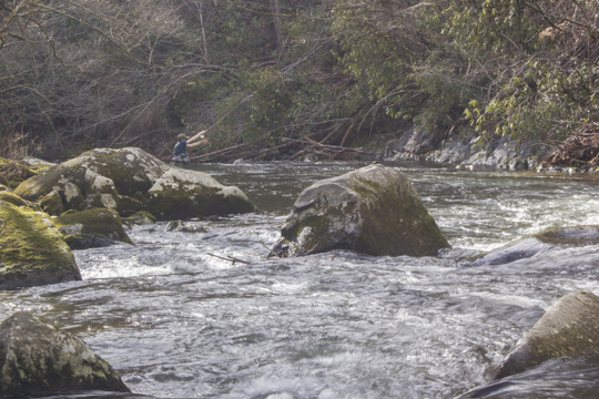 Pocket water nymphing on Little River in the Smokies