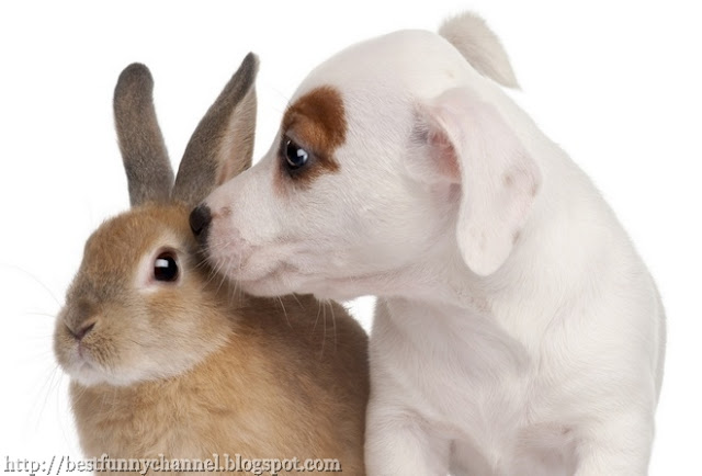 Bunny and white puppy.