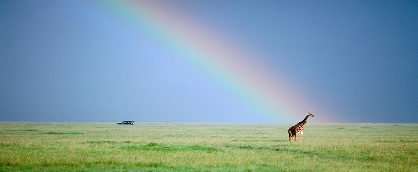 Giraffe And Rainbow