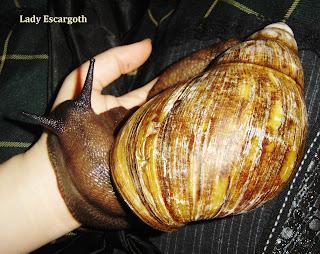 escargot geant