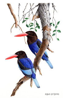Kumpulan Cerita Dongeng Suri Ikun dan Dua Burung