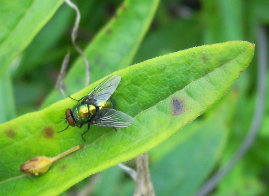 fishndave backyard bug pics