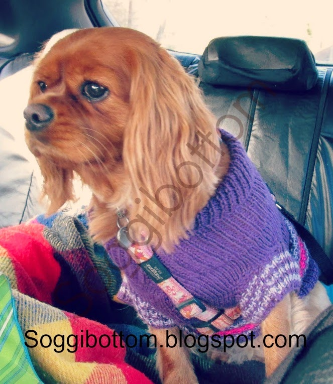 Soggibottom Free Soggibottom Knitted Dog Sweater Pattern