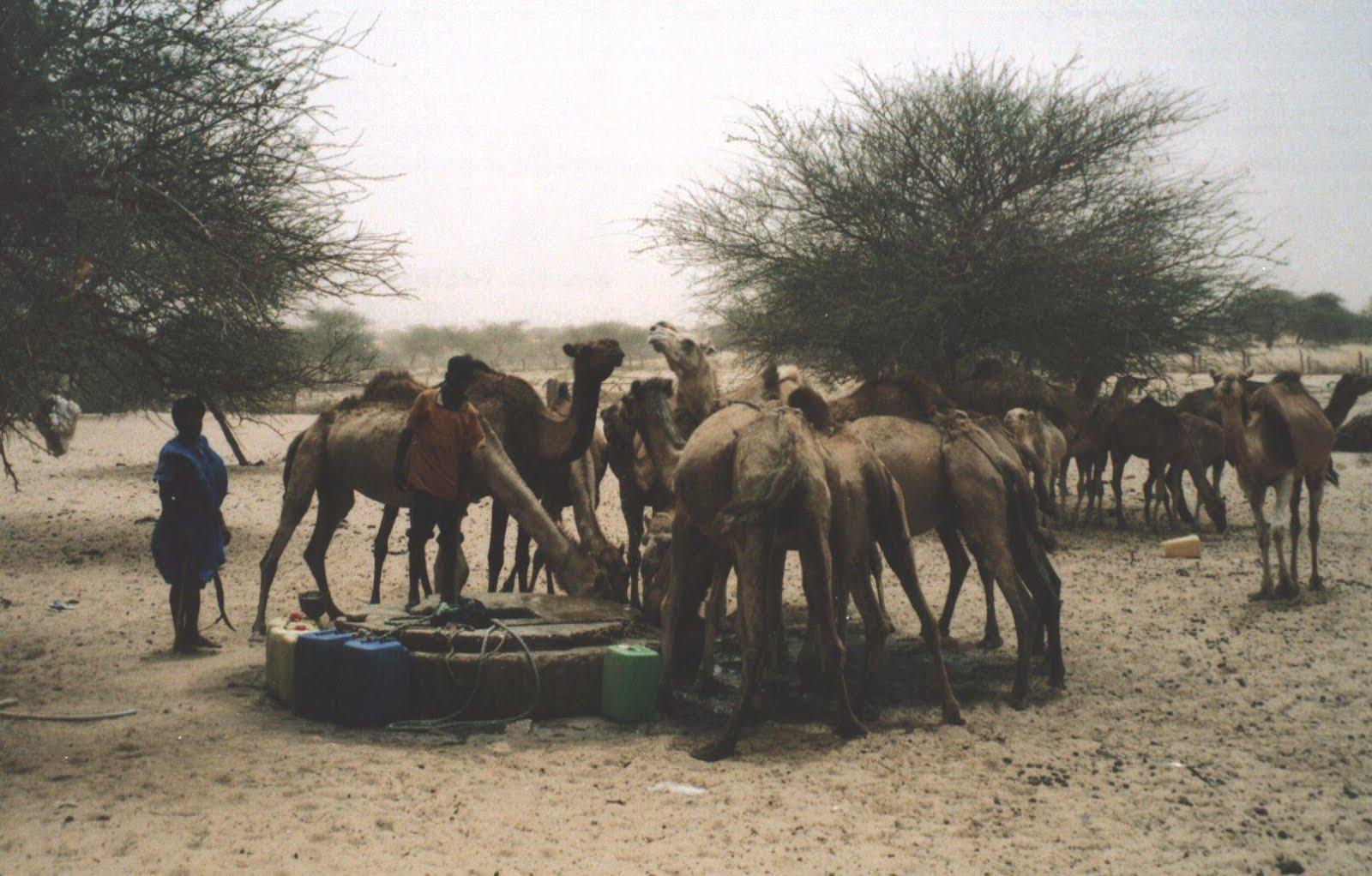 2002. El Sahel (Mauritania)