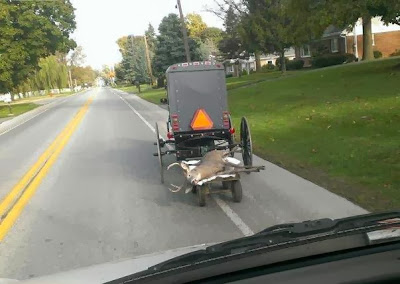 Amish buggy with deer on the back