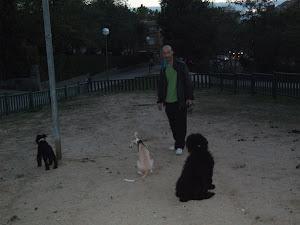 paseador de perros madrid