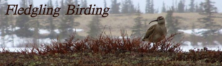 Fledgling Birding