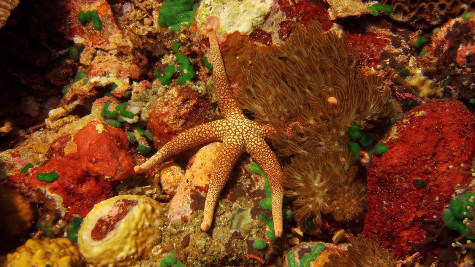 Coral Reef Colors