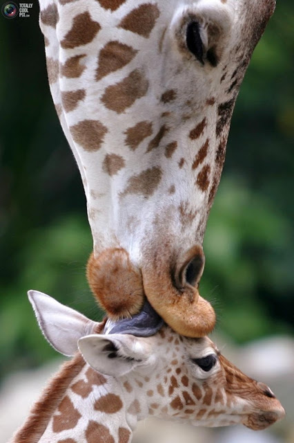 Mommy Kiss
