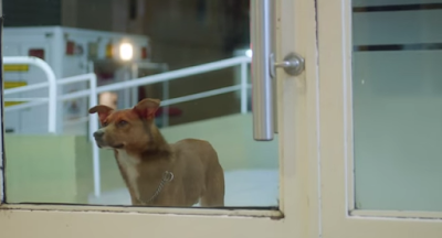 "Screencap from the video ""The Man and the Dog"""