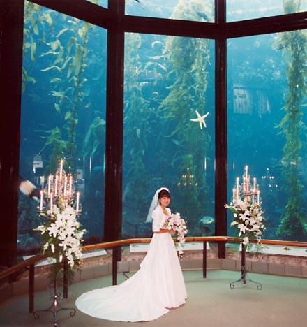 Monterey Bay Aquarium Wedding Christine O 39 Donnell