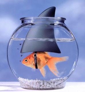Esp ce de poisson rouge il tait un petit poisson que for Poisson rouge a donner
