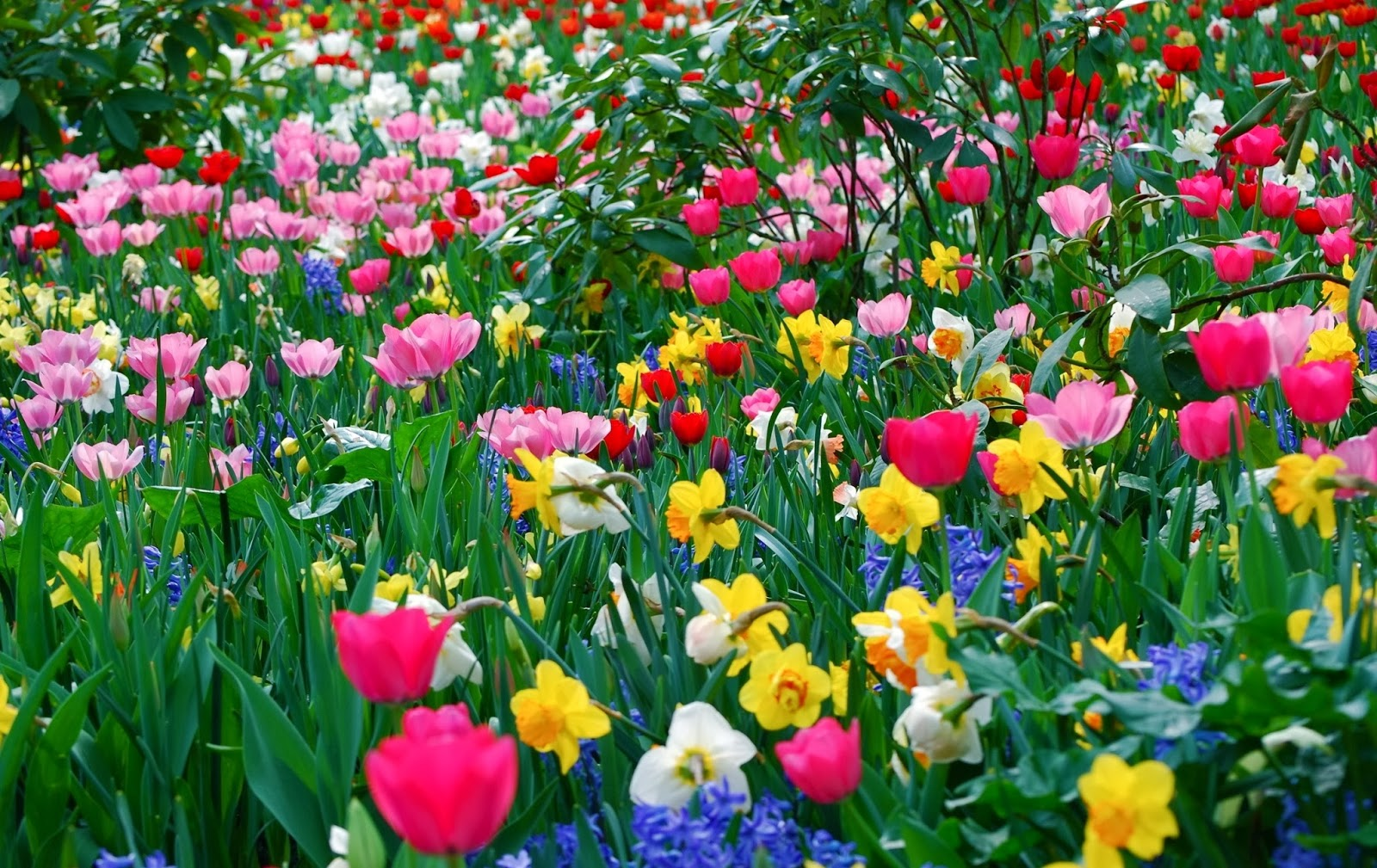 Spring hd flowers - Flowers that bloom from spring to fall ...