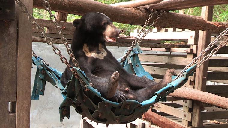 Bonnie in his hammock