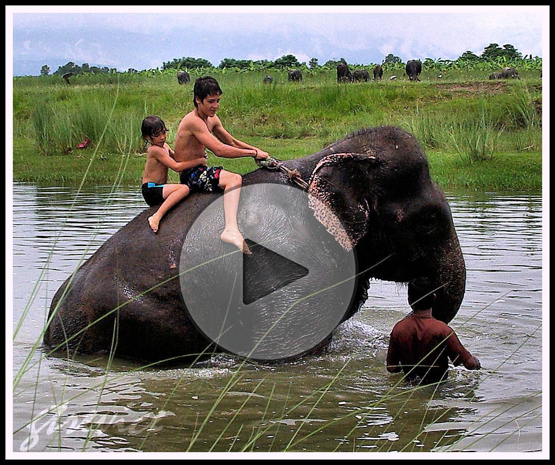 VIDEO: Baño con elefantes.