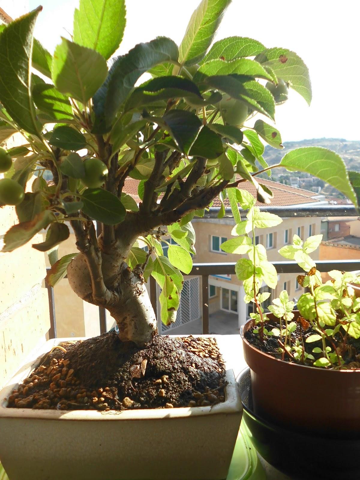 Estilo y hogar cuidados de un bonsai - Como cuidar bonsais ...