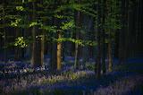 ΠΕΡΙΒΑΛΛΟΝ: Η φυσική αναγέννηση των δασών,