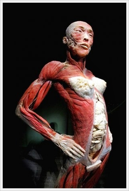 Human Body without Skin